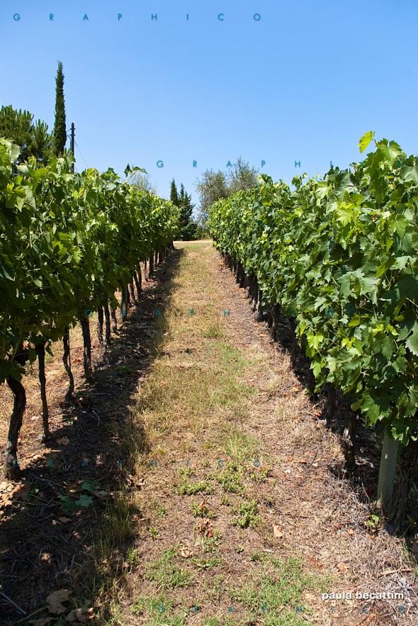Le vigne di Vallocaia
