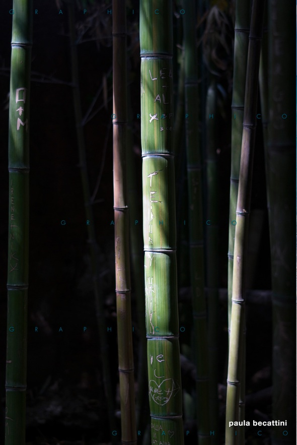 Canne di bambù segnate