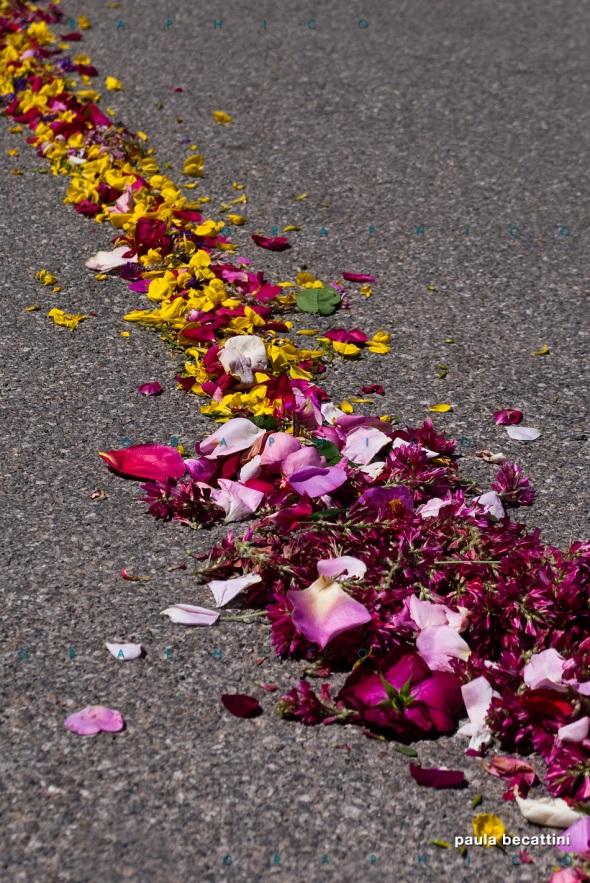 Petali sull'asfalto