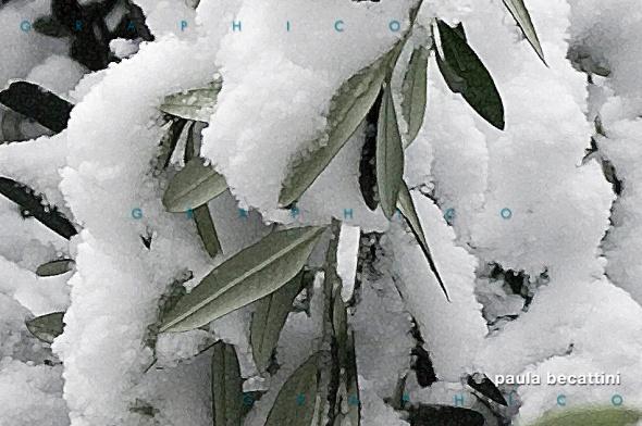 Neve su foglie d'ulivo