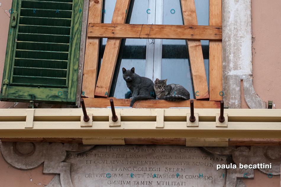 Due gatti a L'Aquila