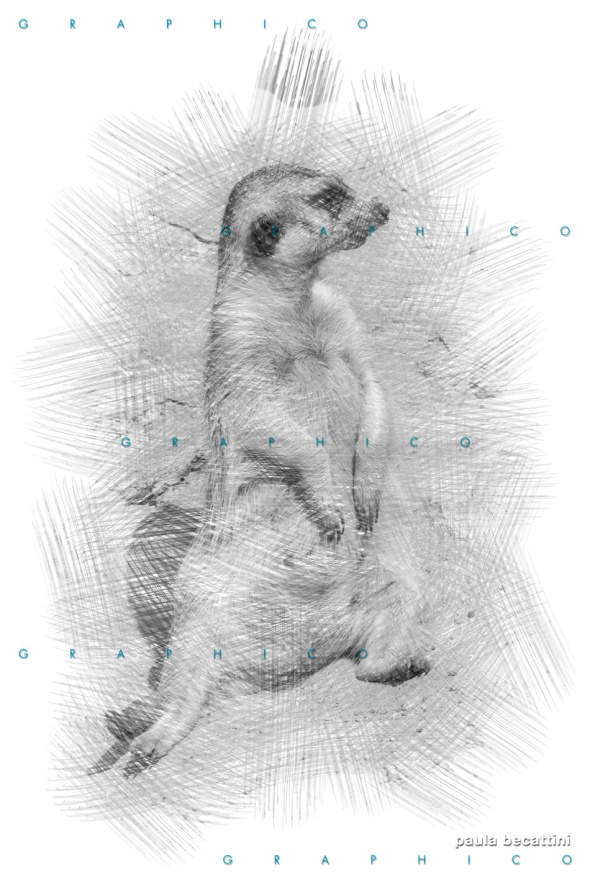 Cane della prateria: elaborazione grafica con Photoshop